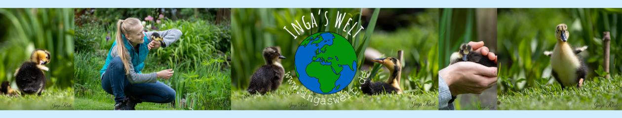 Inga's Welt