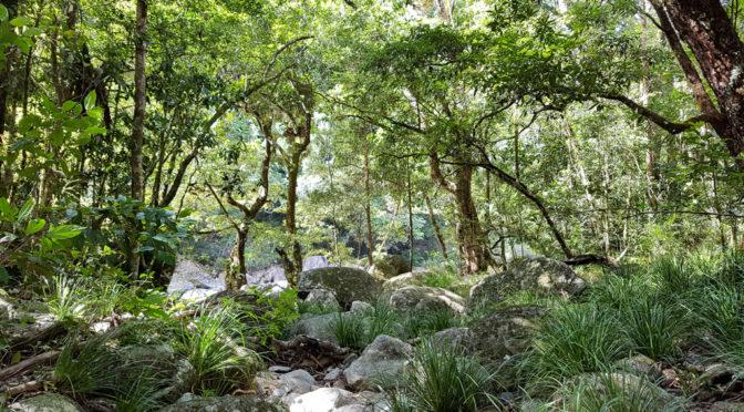 Roadtrip Cape Tribulation – Tag 2